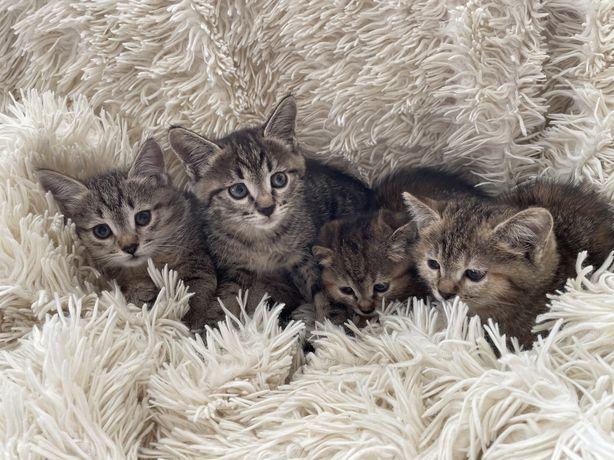 Наикрасивейшие котята