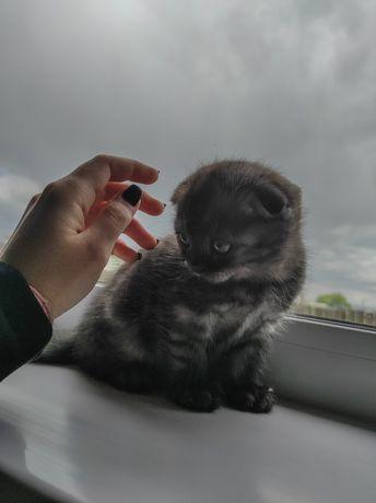 Продам четверых котят!!!