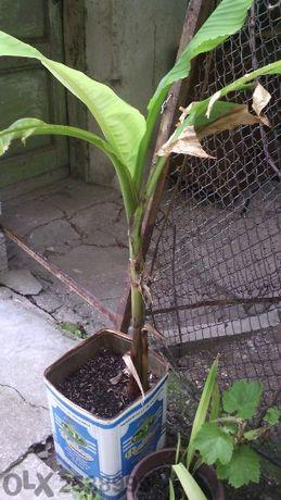 Ниски цени - дръвчета и растения