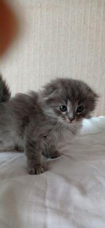 Породистые котята в добрые руки!!!