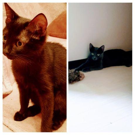 Котята ищут любящих хозяев!