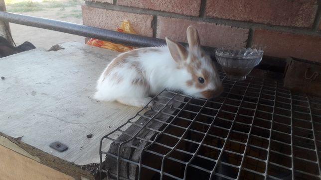 Кролики на продаже декаративный