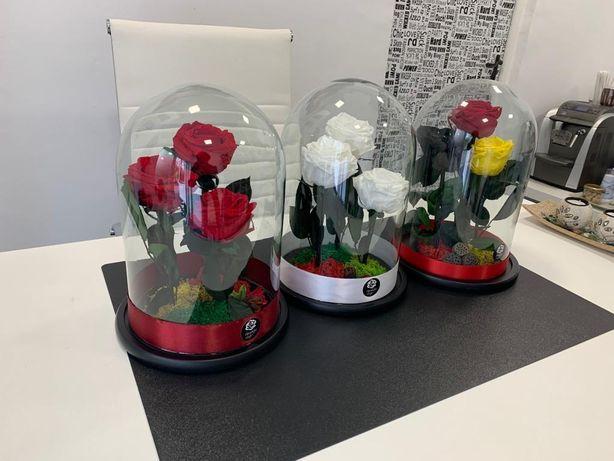 Trandafiri criogenati în cupolă XXI livrare gratuita în București