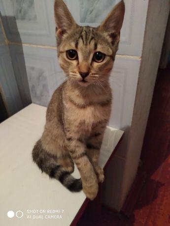 Кошечка от породистого кота