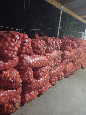 Продам лук идеален для хранения