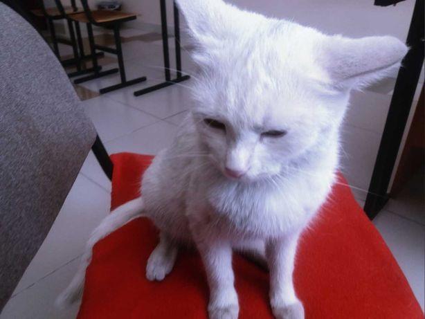 Белоснежные кошки приносят СЧАСТЬЕ!