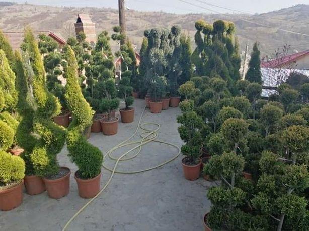 Plante ornamentale si rulou de gazon