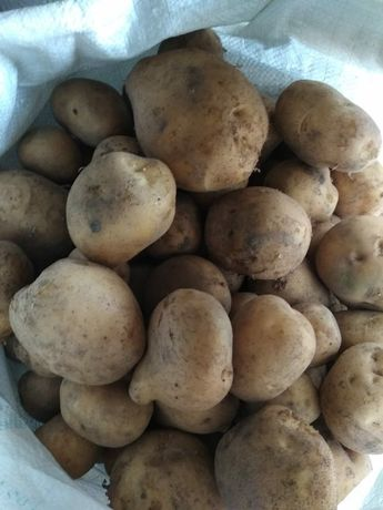 Продам деревенскую картошку