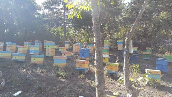 Продавам 10 декъра парцел(пчелин)-ТОК