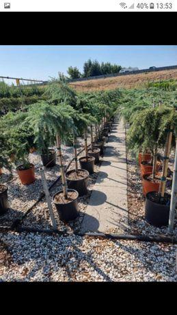 vând plante diverse pentru grădina dumneavoastră