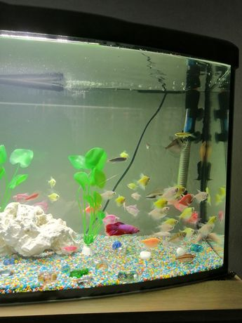 Pești de acvariu de vanzare