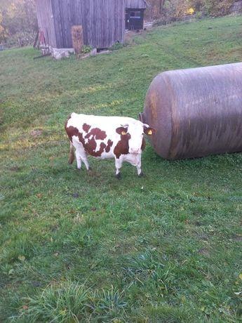 Vand vaca si vitea