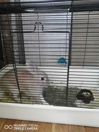 Кролик дикаративный