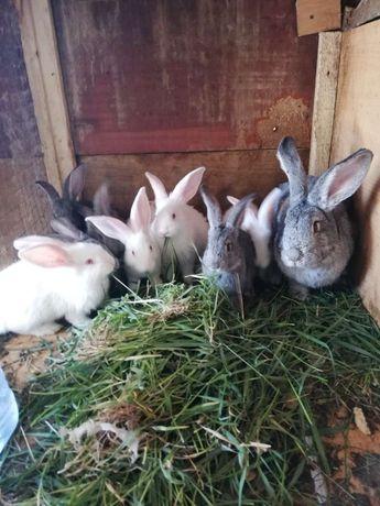 Продам кроликов, мясо кроликов или меняю