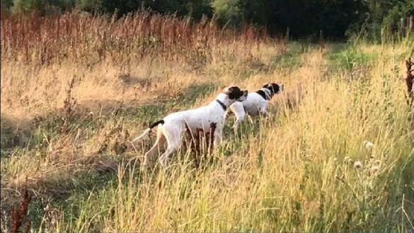 Обучение, дресировка на кучета. За лов или послушание.