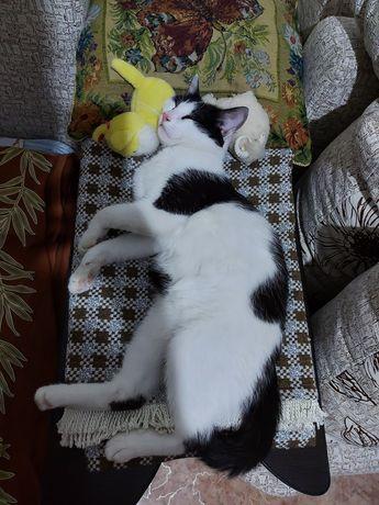 Отдам игривого кастрированного кота