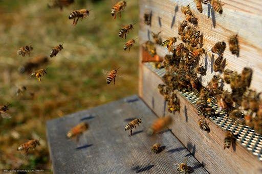 Vânzări apicole, Familii albine, Roiuri de albine, Rame și lăzi stupi