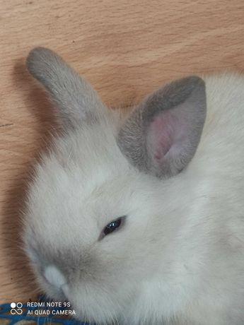 Продам декоративных карликовых крольчат 2000тг.