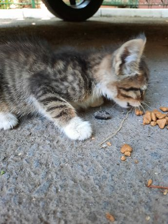 Четверо котят ищут дом