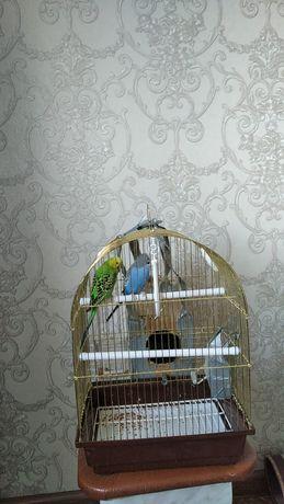 Продам попугаев 12000