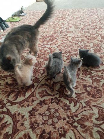 Домашние кошки мяу