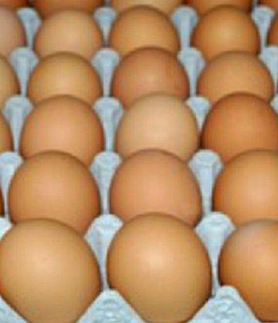 Яйцо бройлера (57-75гр.)
