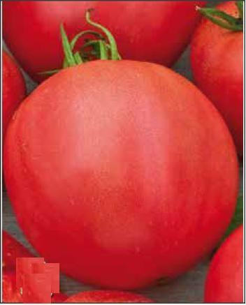 30 Seminte de Tomate Buzau 4 - Soi romanesc, timpuriu