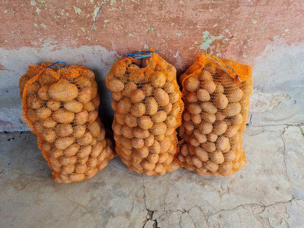 Cartofi mari Bellarosa