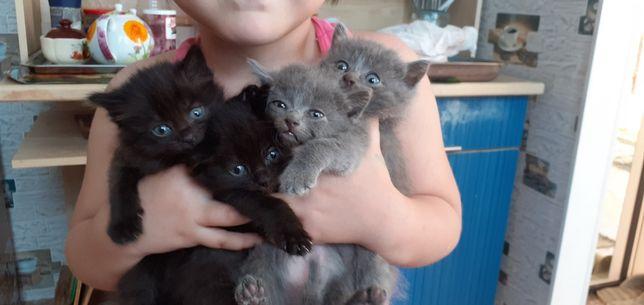 Котята 4 В хорошие руки