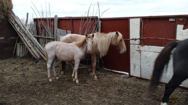 Продам кабылу,  лошадь,  жылқы,  бие,  с жеребенком,  құлын ұрғашы