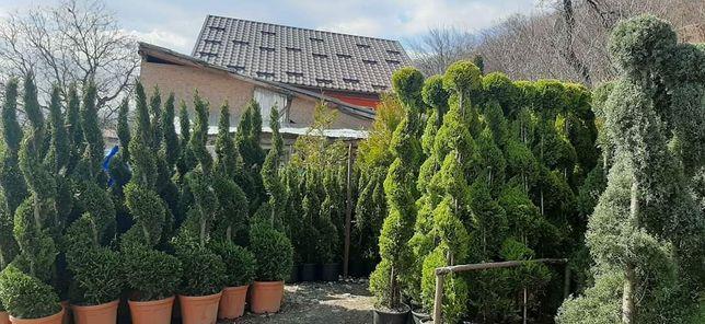 Gazon plante ornamentale piatra naturala de munte cascade gratare