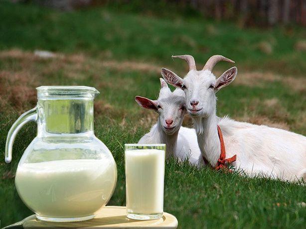 Молоко козье натуральное