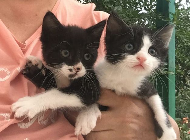 Такие славные котята