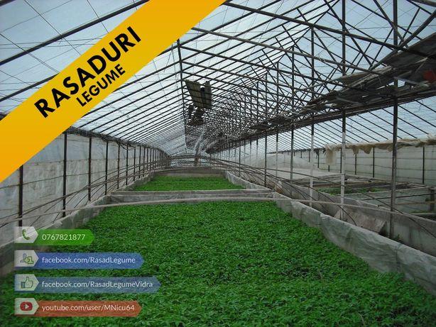 Rasaduri legume : Rasad de ardei rosii castraveti vinete de vanzare