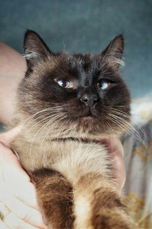 Кастрированный породистый чистоплотный спокойный кот с доставкой