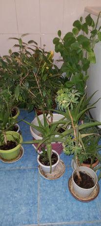 Растения по 3000,4000, по 5000тыс