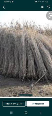 Продам камыш камыс 300 бау