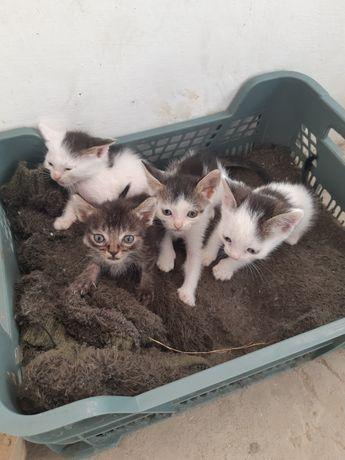 Котёнок 2-мальчик и 2-девочка, 2-3 месяца