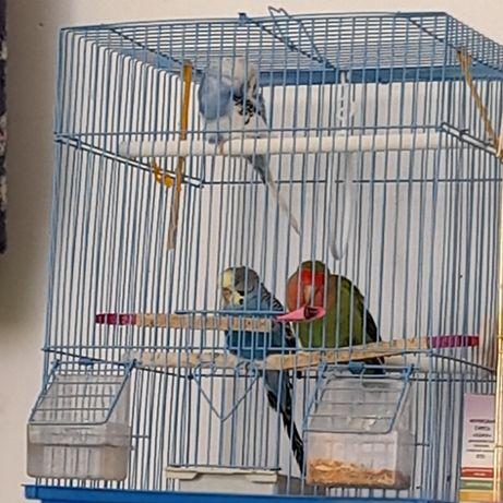 Продам попугаев,в связи с уездом
