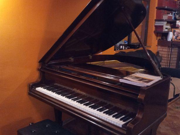 Vand/schimb pian cu coada scurta Hofmann