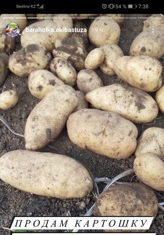 Продам срочно картошку