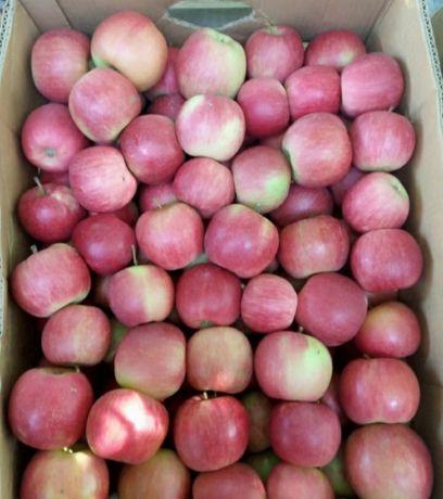 Продам яблоки с доставкой
