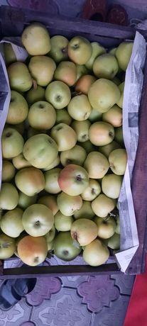 Яблоки золотой и американка