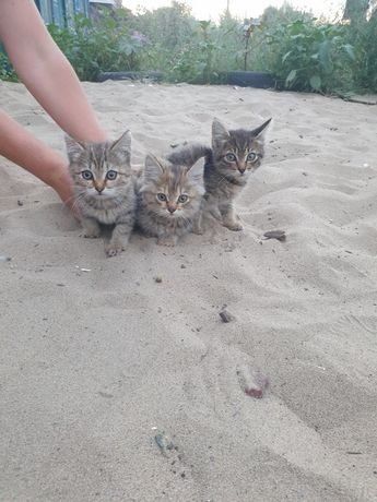 Мир всем!Заберите пожалуйста этих мимишных котят.