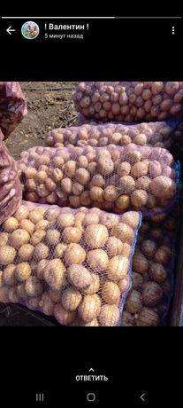 Местный картофель
