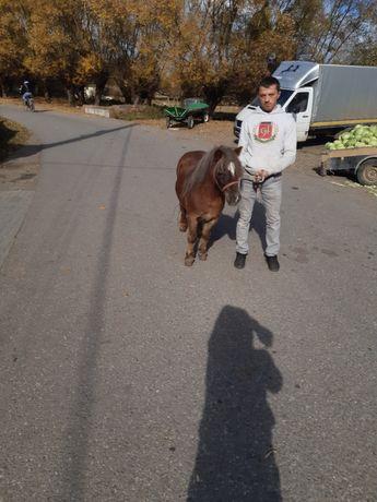 Vând poneița de 5 ani