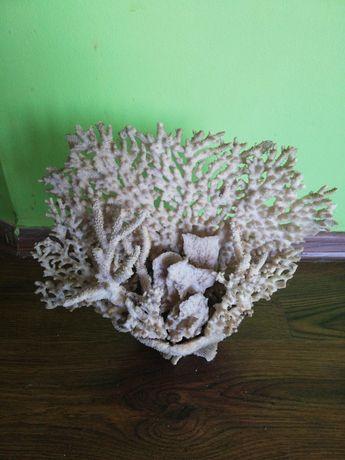 Естествен морски корал