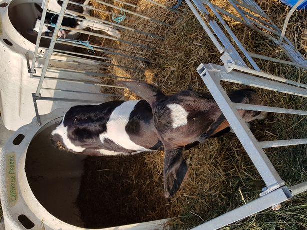vitei alb cu negru
