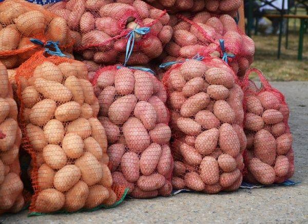 картофель картошка Анна Гала очень хорошие