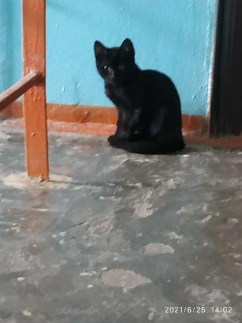 Котенок Черный. Вроде мальчик. Приблудыш